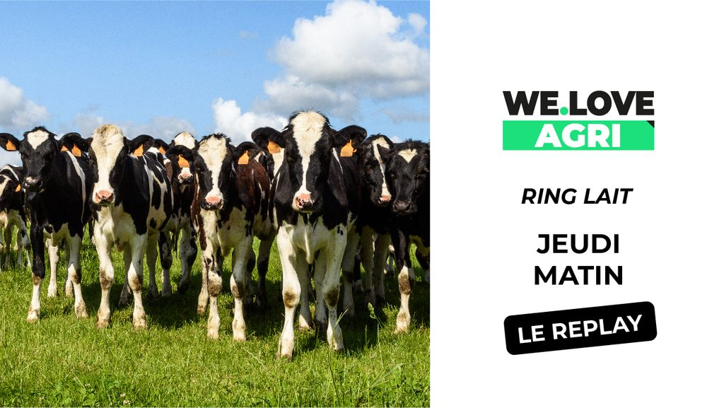 03 Octobre : Sommet de l'élevage - Ring Lait - Matinée