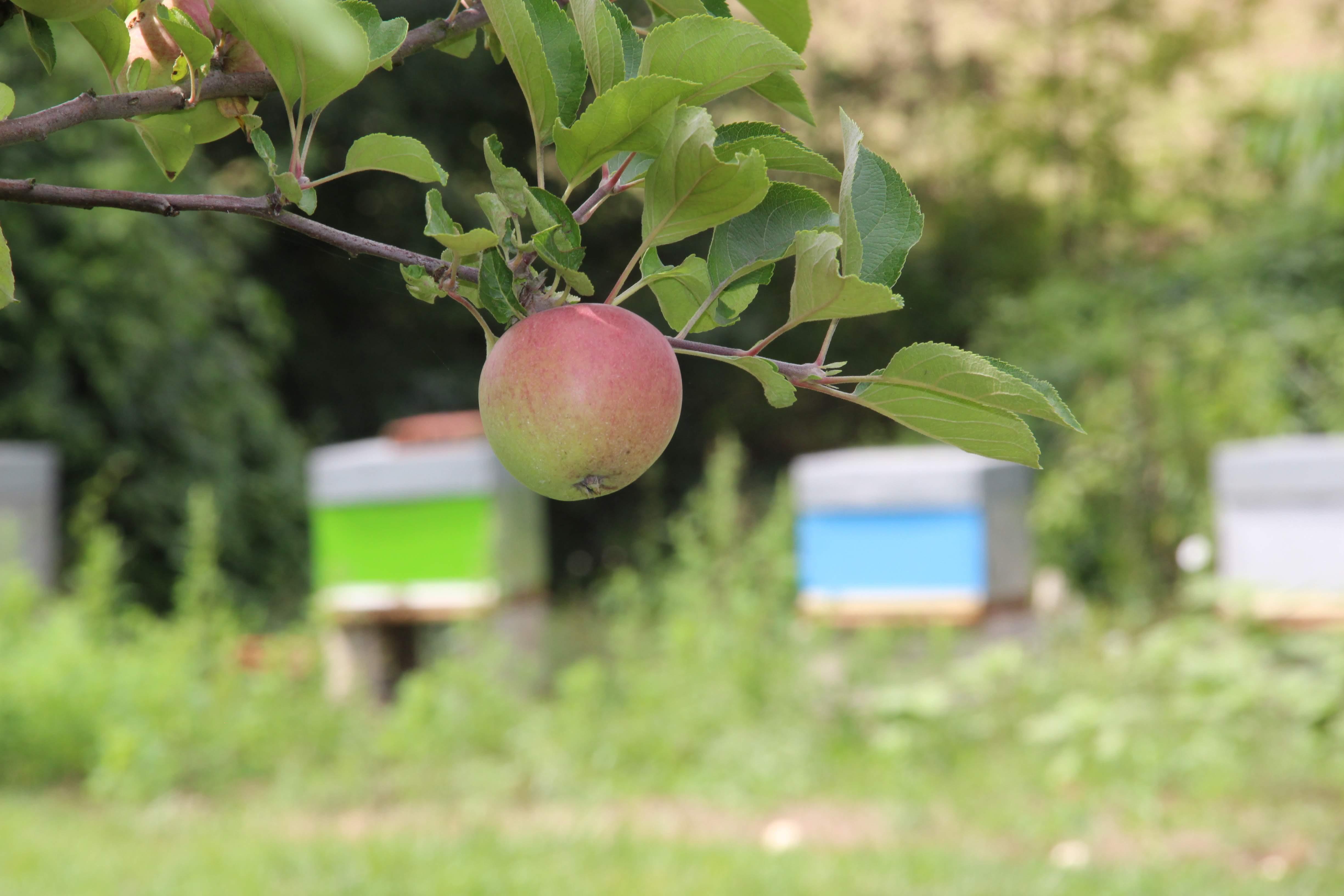 #AgriGoodNews : une étude montre la confiance des Français dans les fruits et légumes