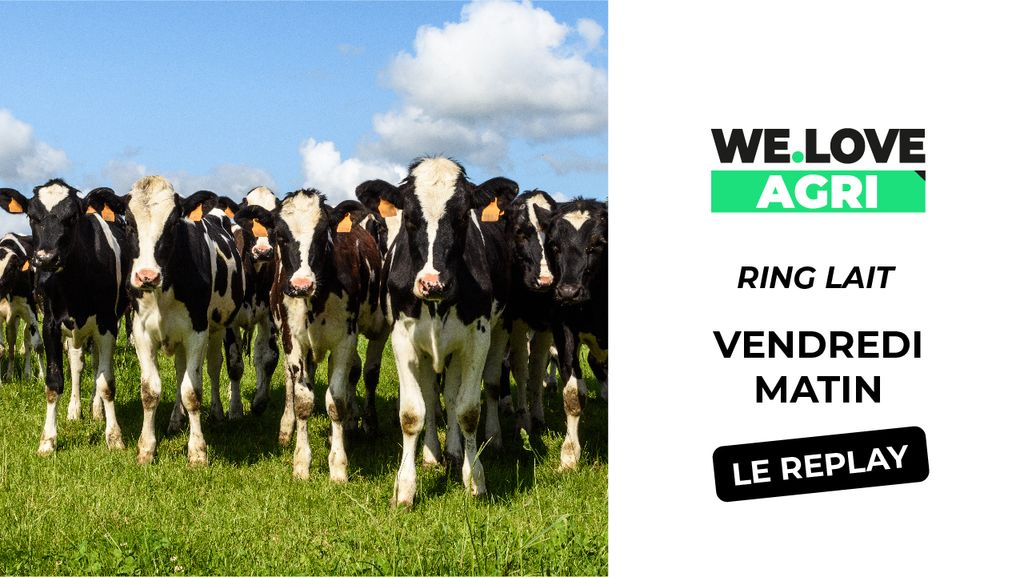 04 Octobre : Sommet de l'élevage - Ring Lait - Matinée